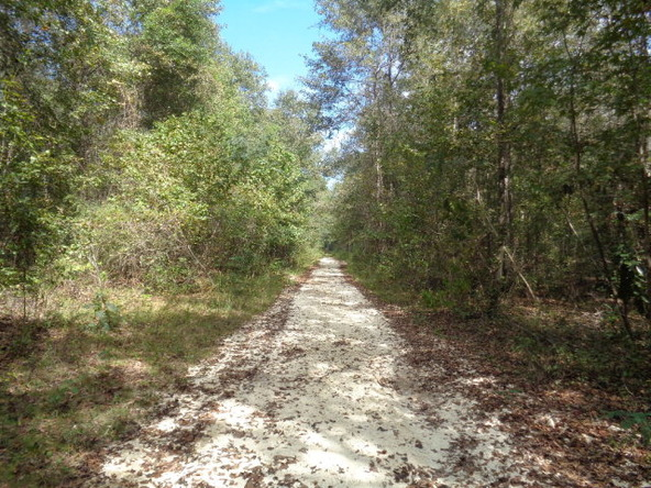31.2 Ac Johnny Murphy Rd., Dothan, AL 36301 Photo 26