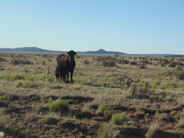 1430 Sierra Verde Ranch, Seligman, AZ 86337 Photo 1
