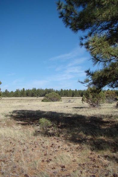 314 Williams Dr., Lakeside, AZ 85929 Photo 30
