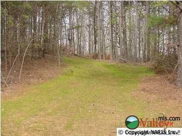 Lot 8 County Rd. 822, Collinsville, AL 35961 Photo 3