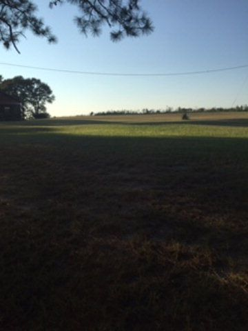 16859 Moore Rd. (Cr 17), Andalusia, AL 36420 Photo 19