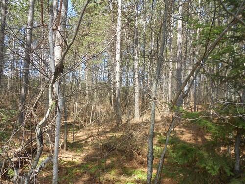 Lot 7 On Towering Pines Ln., Rhinelander, WI 54501 Photo 12