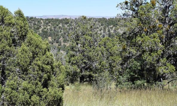 264 Sierra Verde Ranch, Seligman, AZ 86337 Photo 22