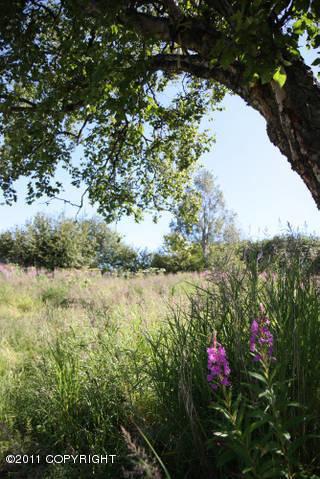 16930 Dilligara Ln., Clam Gulch, AK 99568 Photo 13