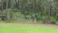 Home for sale: 00 Bunnell Rd., Seville, FL 32190