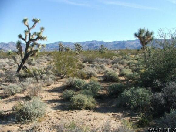 3529-C Arroyo Rd., Yucca, AZ 86438 Photo 9