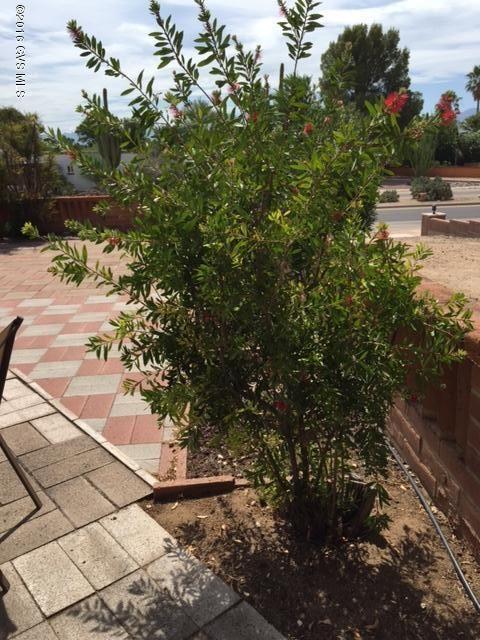 328 S. Abrego, Green Valley, AZ 85614 Photo 46