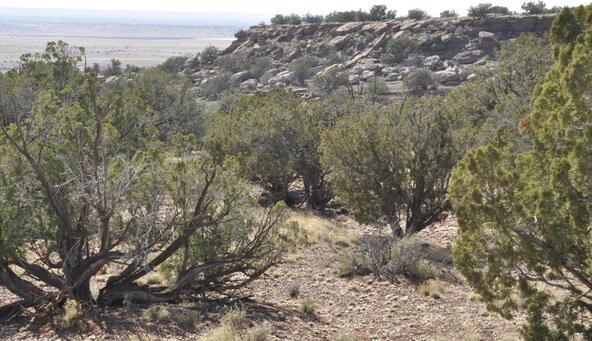 297 Woodridge Ranch, Concho, AZ 85924 Photo 22