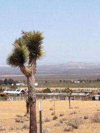 Home for sale: Vicinity Ft Tejon 175th St., Llano, CA 93544