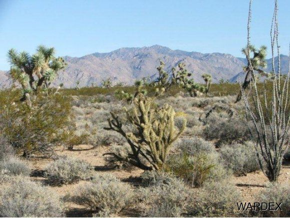 3529-D Arroyo Rd., Yucca, AZ 86438 Photo 12