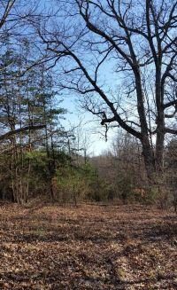 Home for sale: 29 Ac. - N. Lee Hwy., Fairfield, VA 24435