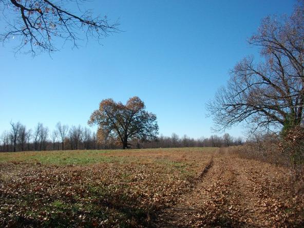 1059 Pleasant Run Rd., Mammoth Spring, AR 72554 Photo 16