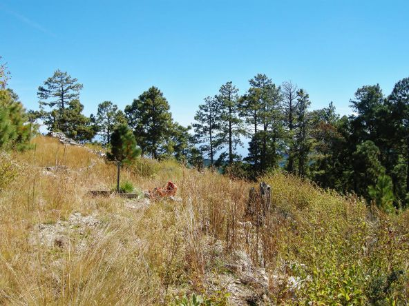 12717 N. Upper Loma Linda, Mount Lemmon, AZ 85619 Photo 3