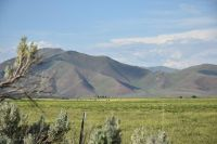 Home for sale: Peck Rd., Carey, ID 83320