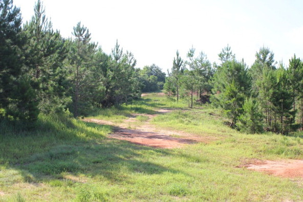19815 County Rd. 12, Foley, AL 36535 Photo 7