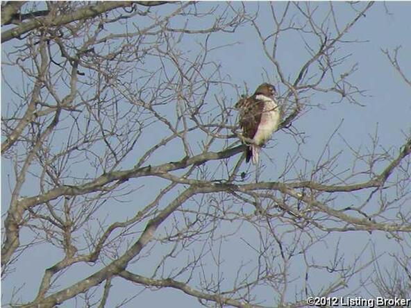 9 Fox Lair Blvd., Fisherville, KY 40023 Photo 19