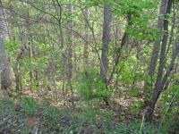 Home for sale: 25 Long Cedar Ln., Alexis, NC 28006