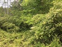 Home for sale: 7 Lester Cir., Dunlap, TN 37327