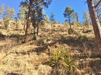 Home for sale: 240 Paradise Canyon Dr., Ruidoso, NM 88345