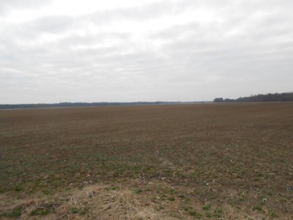 402.93 Acres Long Creek, Waldenburg, AR 72475 Photo 9