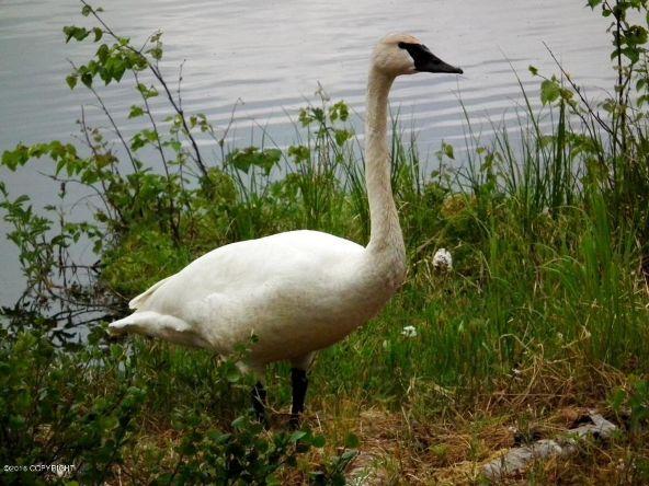 13752 W. Airigin Dr., Big Lake, AK 99652 Photo 17