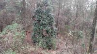 Home for sale: Lot 3 Hampton Pl., Ozark, AL 36360