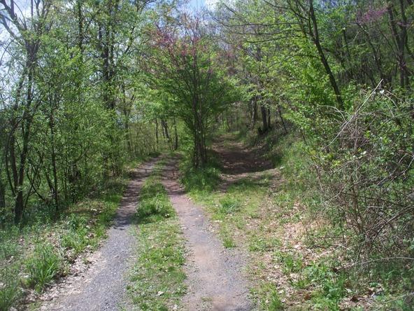 Plum Run Rd., Ridgeley, WV 26753 Photo 14