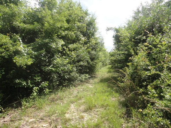 4.2 Ac Enoch Rd. (Cr 57), Andalusia, AL 36421 Photo 1