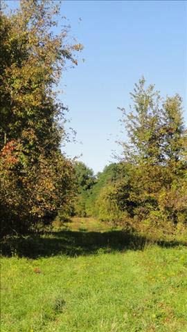 Cty Rt 27, Claverack-Red Mills, NY 12513 Photo 9