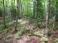 Home for sale: 15 Acres On Stager Lake Rd., Crystal Falls, MI 49920