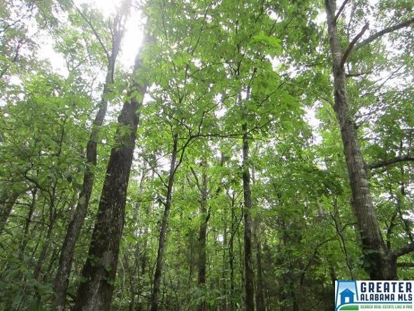40 Acres Oaks Chapel Rd., Goodwater, AL 35072 Photo 12