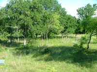 Home for sale: 3 Lots Demonbruen, Runaway Bay, TX 76426