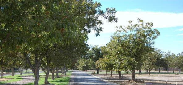 20553 E. Pecan Ln., Queen Creek, AZ 85142 Photo 3