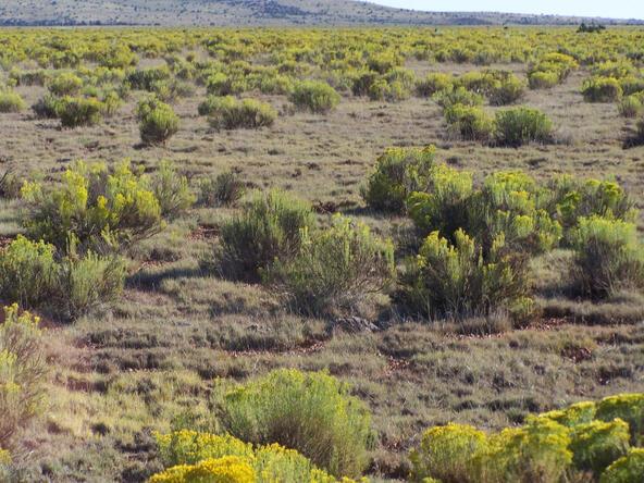 10714 W. High Butte Dr., Williams, AZ 86046 Photo 2