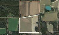 Home for sale: 65 Acres Faceville Attapulgus, Bainbridge, GA 39819