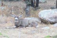 Home for sale: 951 Norris, Prescott, AZ 86305
