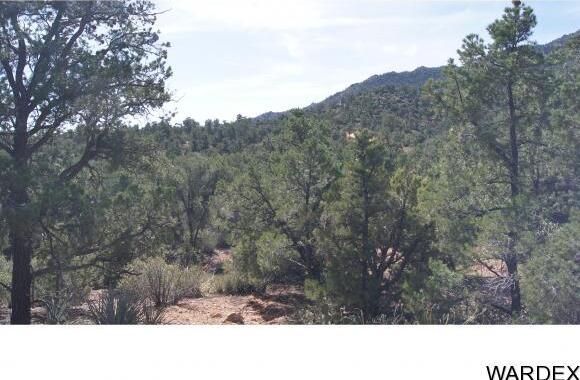 9999 N. Trap Springs Rd., Hackberry, AZ 86411 Photo 7