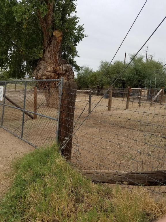 781 Weaver St., Wickenburg, AZ 85390 Photo 4