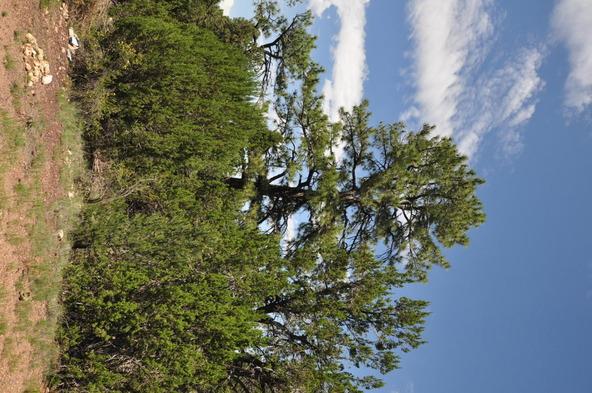 3146 Ranch Rd., Overgaard, AZ 85933 Photo 9