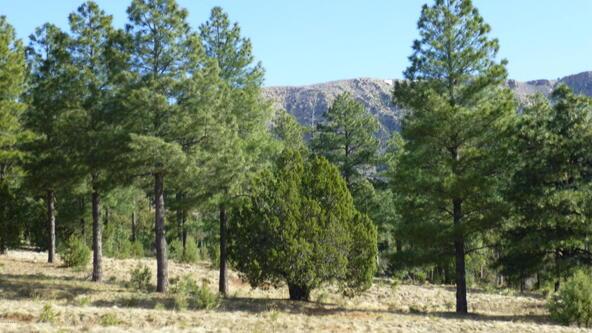 220 W. Zane Grey Cir., Christopher Creek, AZ 85541 Photo 48