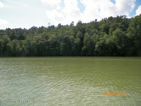 1202 Forest Service Rd., Arley, AL 35541 Photo 8
