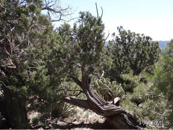 808 Sierra Verde Ranch, Seligman, AZ 86337 Photo 6