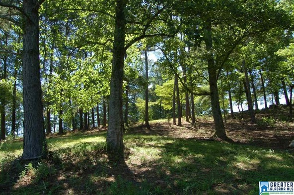 5.5 Acres Hwy. 431, Wedowee, AL 36278 Photo 7