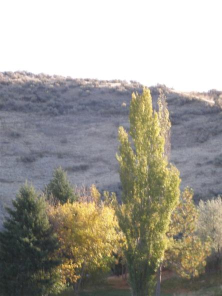 15387 N. Spring Creek Ln., Boise, ID 83714 Photo 14
