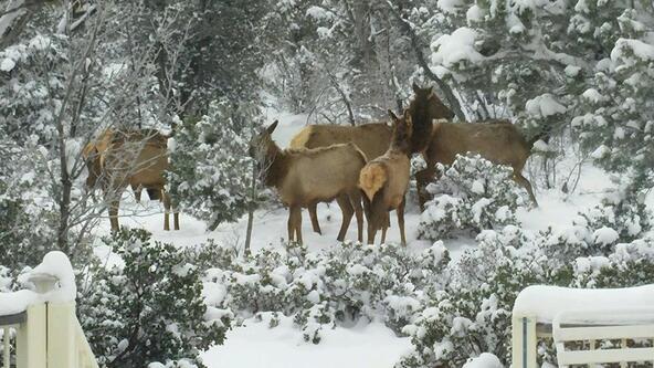 881 W. Sierra Pines Dr., Show Low, AZ 85901 Photo 51