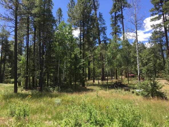 29 Cr 2266, Alpine, AZ 85920 Photo 16