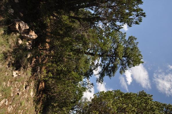 3146 Ranch Rd., Overgaard, AZ 85933 Photo 5