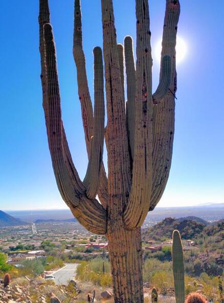 13417 N. 137th St., Scottsdale, AZ 85259 Photo 26
