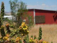 Home for sale: 431 S. Tumbling T Dr., Springerville, AZ 85938