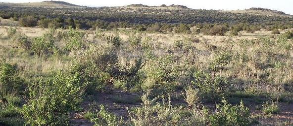 6787 S. Rising Sun Rd., Williams, AZ 86046 Photo 8